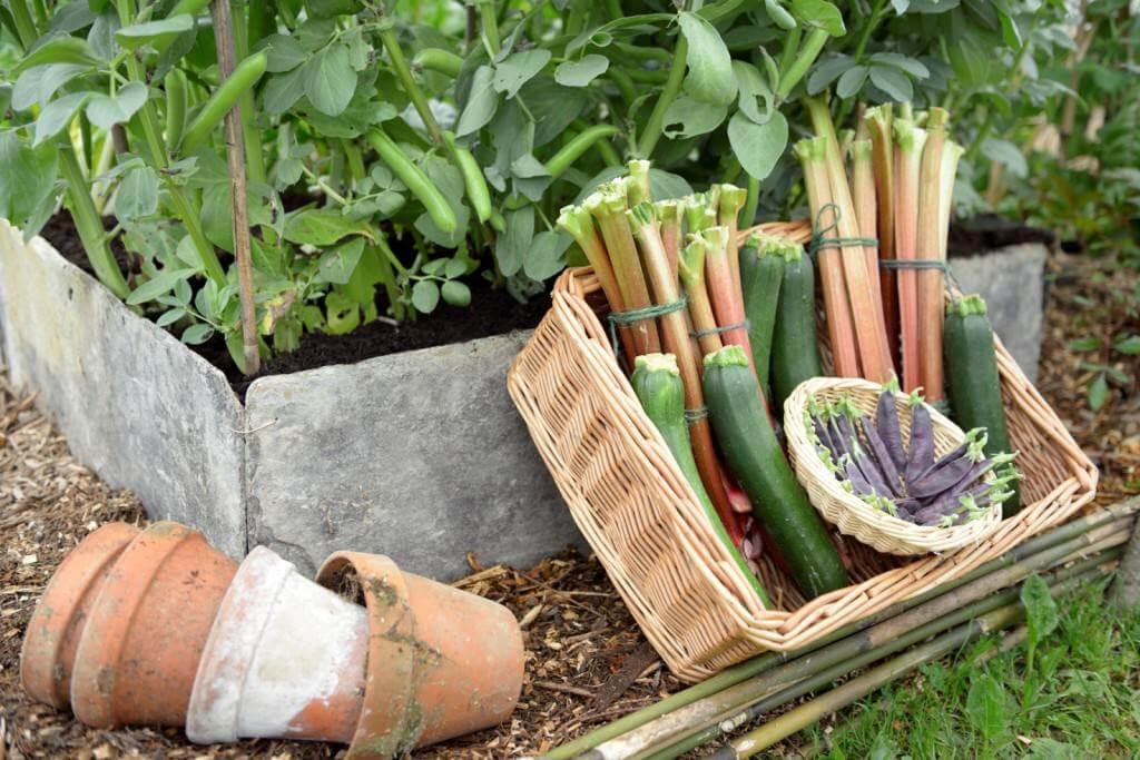 Perennial stand pic 2 Porcupine PR