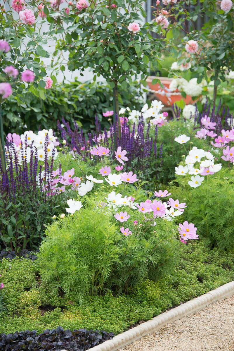 Plant list perennial for Flowering landscape plants