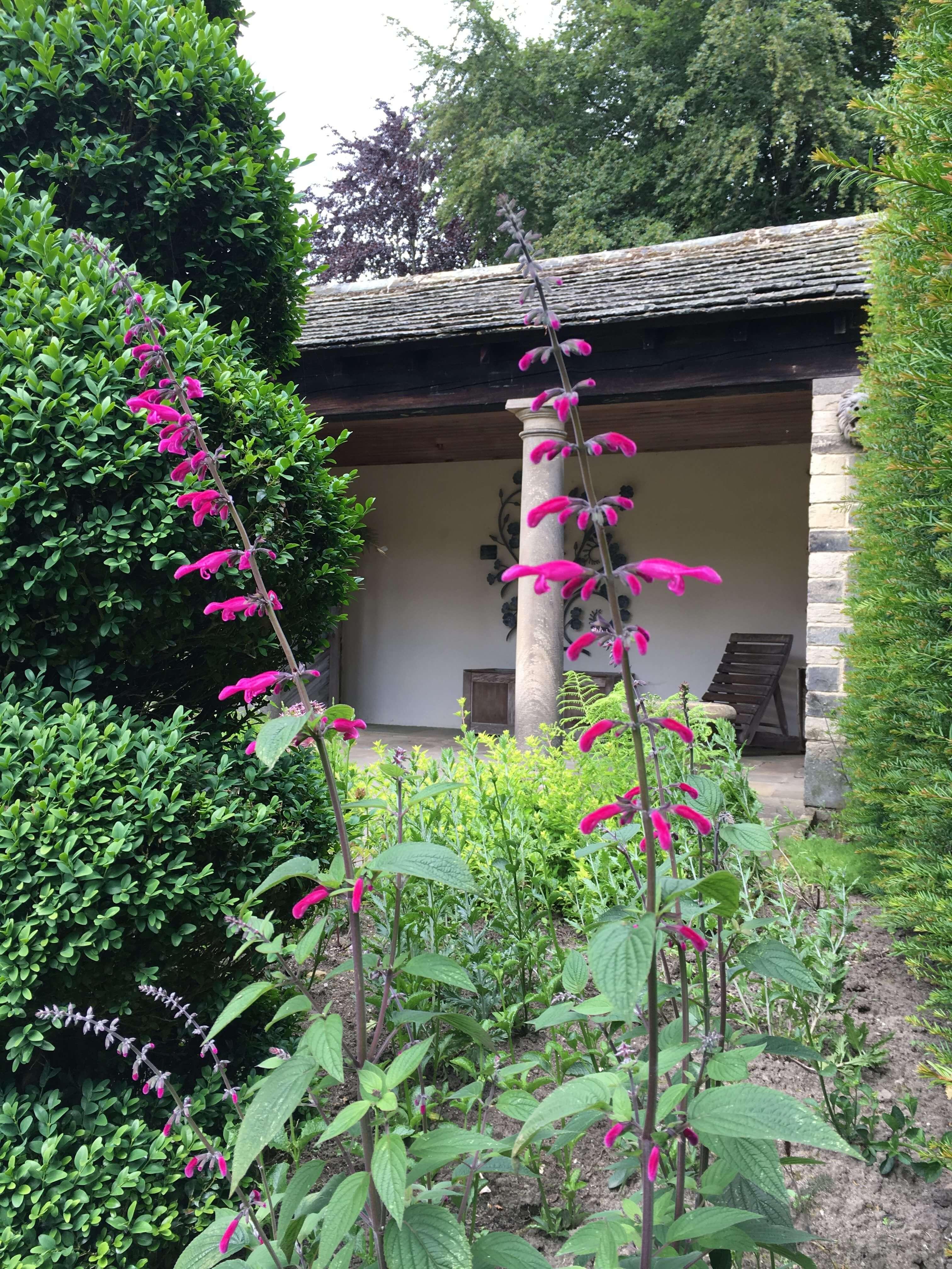 From the Head Gardener | Perennial