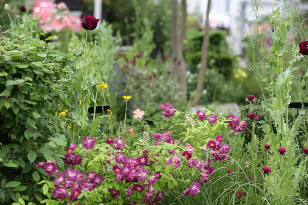 Perennial Lifeline Garden wins Silver-Gilt at RHS Chelsea ... on garden flowers names, garden plans, garden catalogs 2014, garden flowers maintenance, garden ideas, garden landscaping, garden flowers water, garden flowers pots, garden flowers roses, garden flowers birds, garden flowers pond, garden art, garden flowers that bloom all summer, garden flowers by color, garden gate with arbor, garden with flowers, garden flowers bulbs, garden flowers nurseries, garden design, garden plants,